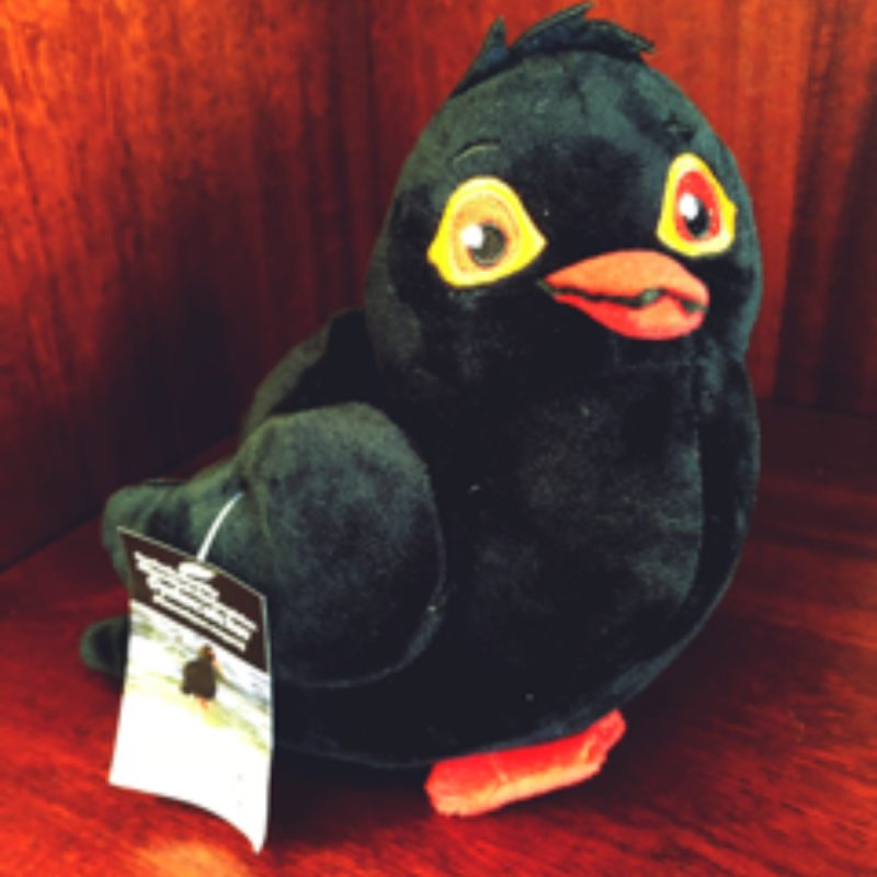 Oyster Catcher Birdlife Stuffed Toy | Birdlife South Africa Fundraiser. Support a great cause. BirdLife South Africa wishes to see a country and region where nature and people live in greater harmony, more equitably and sustainably